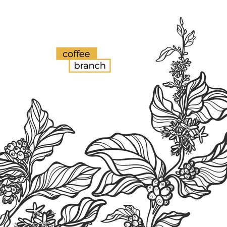 Sjabloon van zwarte tak van koffie boom met bladeren en natuurlijke koffiebonen. Biologisch product. Silhouet, vorm. Botanische illustratie. Vectordieillustratie op witte achtergrond eps 10 wordt geïsoleerd Stock Illustratie