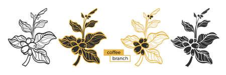 Reeks verschillende takken van koffieboom met bladeren en natuurlijke koffiebonen op witte achtergrond. Biologisch product. Silhouet, vorm. Natuurcollectie. Vector eps.10