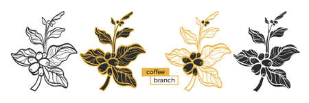 Set of different branches of coffee tree with leaves and natural coffee beans on white background. Organic product. Silhouette, shape. Nature collection. Vector eps.10