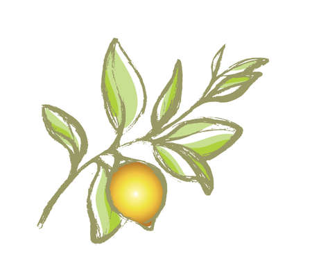 Branch of lemon tree with leaves and natural fruit. Botanical contour drawing. Organic product. Silhouette, shape. Vector illustration isolated on white background eps.10