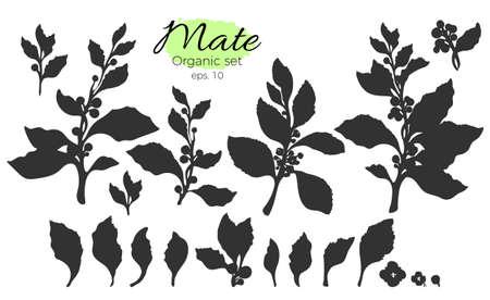 Collection de vecteur de branches de la silhouette noire. Ensemble de forme de feuilles et de fleurs. Art de la nature sur fond blanc. Banque d'images - 88917810