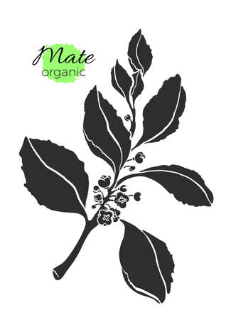 Vector silhouette of black mate branch on white background. Shape nature illustration with realistic leaves and flowers. Botanical drawing.