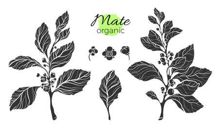 Collection de vecteur de branches de mate silhouette noire. Forme réaliste sertie de feuilles, de fleurs et de baies. Collection de la nature sur fond blanc. Dessin botanique. Banque d'images - 93801957