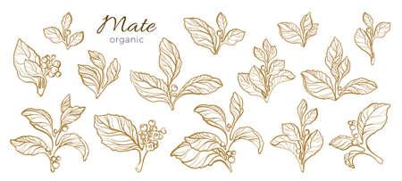 Collection de vecteur de branches réalistes. Ensemble de nature de compagnon avec des feuilles, des fleurs et des baies. Croquis de ligne art sur fond blanc. Dessin botanique. Banque d'images - 93936730