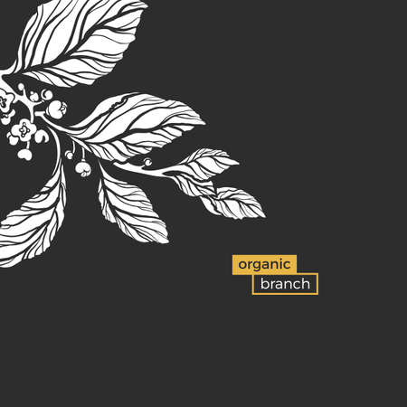 Template of white branch of mate tree with leaves and natural flowers on black background. Organic food. Silhouette, shape. Nature illustration.