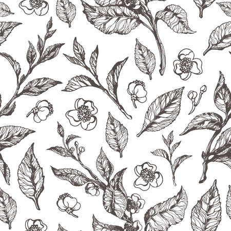 Vector floral seamless pattern. Nature illustration with various leaves and flowers. Botanical classic black sketch in vintage style on white background. Tea bush. Organic food eps.10