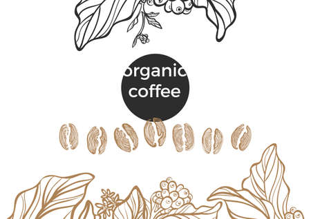 Vector realistic set of coffee bean and branch of tree with leaf and flower on white background. Organic food. Vector collection. Sketch design natural motifs. Illustration isolated and grouped eps.10