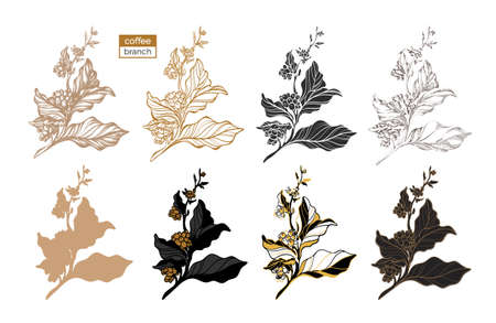 Vector set of coffee tree branches with leaves and beans. Botanical drawing, sketch. Line art design. Realistic nature style. Organic food. Big collection. Realistic illustration on white background