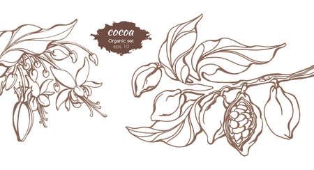 Modello di vettore dei rami degli alberi di cacao con foglie, fiori e fagioli. Disegno botanico. Design semplice schizzo, set realistico floreale. Cibo organico. Illustrazione isolati su sfondo bianco. Copia spazio Vettoriali