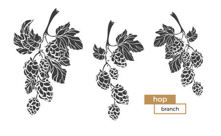 Set branches of hops with shape leaf and cone. Botanical silhouette draw design. Realistic vector plant Eco food Nature sketch Background Organic beer Herb illustration isolated on white background