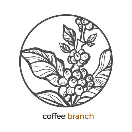 Vector sticker of coffee tree, branch logo with bean, grain Botanical art line drawing design in circle Realistic plant in round frame Eco tropic drink Nature graphic sketch Herb organic illustration