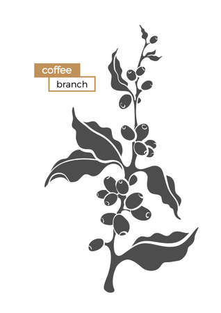 Vector coffee branch with leaf and coffee beans Botanical shape drawing design Realistic plant Eco food Nature background Organic drink Black silhouette illustration isolated on white background Eps10