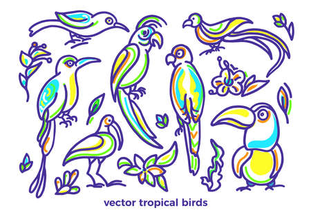 Vector set of wild tropical bird, color plant, nature leaves, flower. Cockatoo, toucan, parrot, macaw, quetzal. Hand drawn paradise summer sketch Art line illustration Graphic simple design isolated