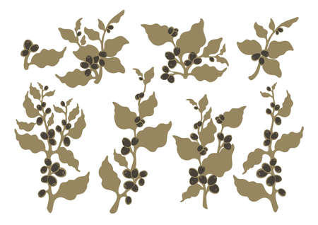 Vector set Coffee tree, branch, leaves, bean, berry, grain Botanical nature art isolate Aroma tropical drink Organic plants for vegetarian Sketch illustration isolated on white background Simple print
