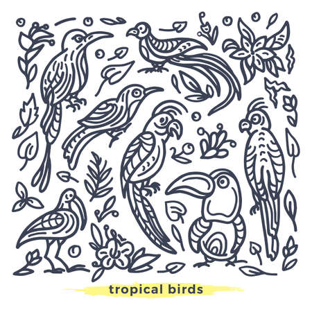 Vector set of wild tropical bird, nature leaf, flower. Art line illustration Cockatoo, toucan, parrot, macaw, quetzal in jungle Hand drawn paradise summer sketch Graphic simple design, isolate element