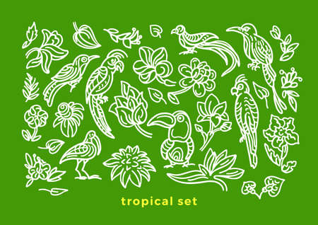 Vector set of wild tropical bird, nature leaf, flower in bloom. Art sketch illustration Exotic cockatoo, toucan, parrot Hand drawn pattern, summer jungle, green paradise Graphic design Element isolate