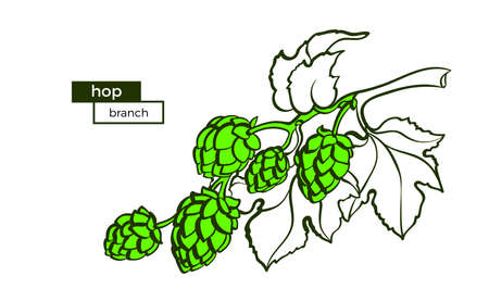 Vector branch of hop. Botany raw plant Symbol of natural food, beverage Art bio shape illustration, organic sign on white background with text space Template design, sign for bar, pub in vintage style