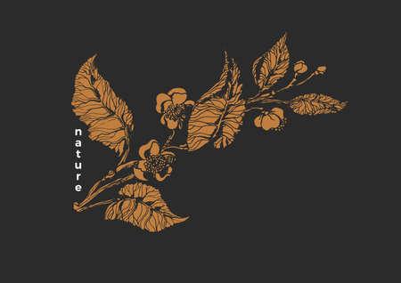 Vector nature template. Botanical tea branch. Realistic vintage leaves, flower. Art old design. Elegant golden background. Organic summer card, romantic engraving, antique floral illustration