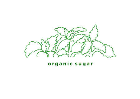 Vector label of stevia. Fresh sugar organic plant. Natural sweet food. Organic diabetic product. Art line sketch, green symbol. Natural fresh leaves on white background Simple design for card