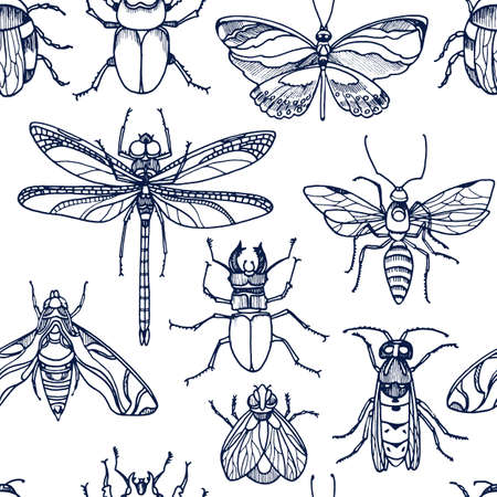 Insect. Wild bee, bug, moth, butterfly. Vector seamless pattern on white background. Realistic engraving set, nature graphic print, hand drawn vintage illustration. Art collection for wrapping paper