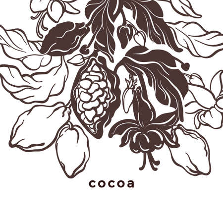 Cacao template. Natural chocolate. Vector nature card. Art hand drawn botanical tree, bean, tropical fruit, leaves. Organic sweet food, graphic sketch Hand drawn template Cocoa package