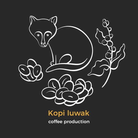 Coffee. Kopi luwak. Natural rich aroma drink. Art line sketch, set of bean, branch, animal civet. Indonesia fermented bio product. Farm expensive food. Group isotates