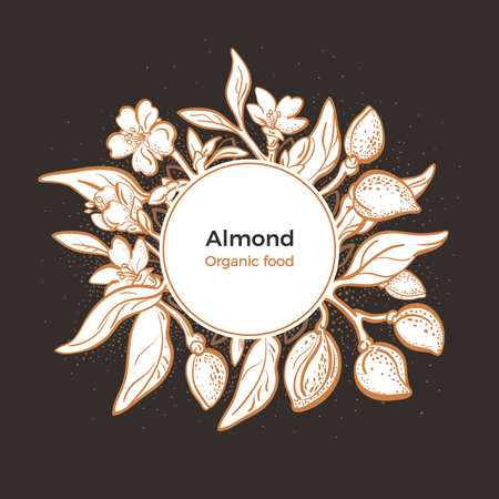 Almond design in circle. Vector natural nut. Botanical branch, fruit, leaf, flower. Realistic illustration on black background. Art shape, vintage graphic sketch. Organic nature milk, bio oil  Çizim