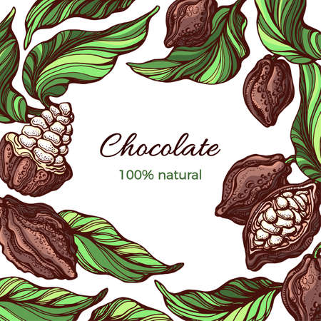 Cacao frame. Vector template. Nature design on white background. Tropical fruit, bean, leaf. Natural tropical harvest. Hand drawn color illustration. Realistic summer border