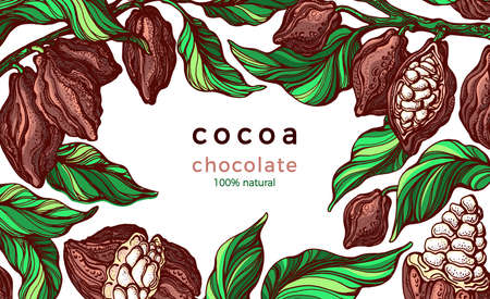 Cocoa frame. Natural chocolate. Vector hand drawn botanical branch, bean, tropical fruit, green leaves. Organic sweet food, graphic art sketch, border. Cacao vintage package. Nature template.