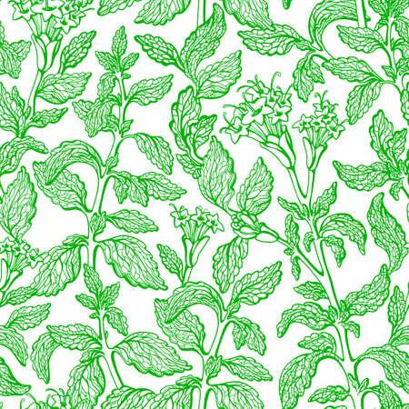 Stevia seamless pattern. Vector green branch, leaf, flower in bloom. Health sweetleaf food. Fresh drink. Organic alternative. Botanical hand draw graphic sketch on white background