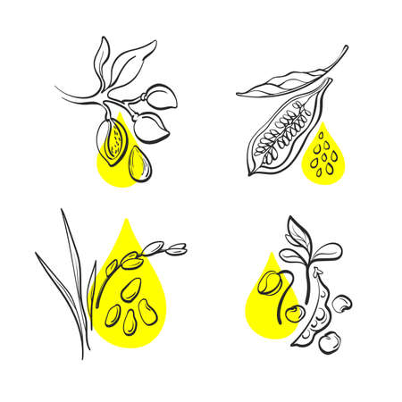 Organic oil. Vector set. Natural bean of soy, nut of almond, sesame grain, rice. Hand drawn collection on white background. Art label, packing and emblem for farmer market design.