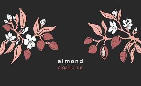 Almond template. Vector natural nut. Natural tree, botanical branch, fruit, leaf, flower in bloom. Art design, vinrage illustration. Organic nature milk, bio oil. Farm plantation Vecteurs