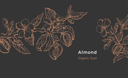 Almond template. Vector natural hazelnut. Botanical branch, fruit, leaf, flower. Art line design. Botanical illustration. Floral shape, vintage graphic sketch. Organic nature milk, bio oil