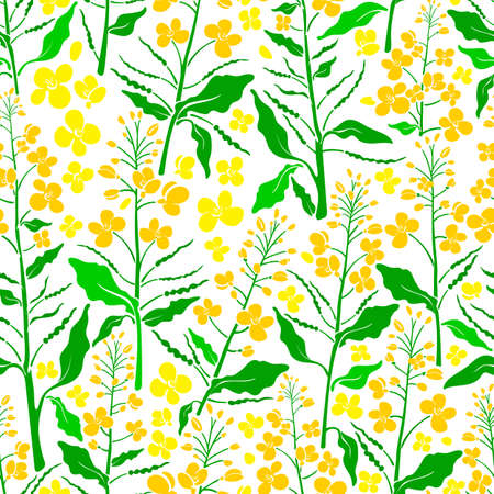 Vector floral seamless pattern. Canola set, mustard plant. Vintage green leaf, bud, seed, yellow flower. Spring plantation. Harvest summer field on white background. Color simple wallpaper Illustration