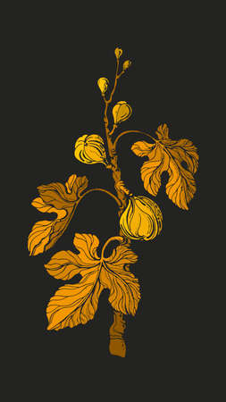 Fig tree. Vector vintage golden branch, fruit, leaf. Art illustration on black background. Botanical texture shape, old engraving. Farm plantation. Antique garden