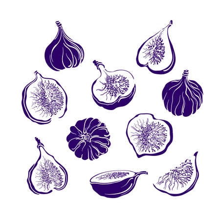 Figs fruit set. Vector monochrome shape. Fresh food, juicy pulp. Collection isolated on white background. Art illustration, sign. Summer natural sweet jam
