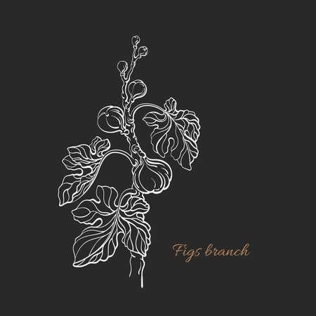 Figs tree. Vector ficus carica graphic illustration. Nature plant, sweet fruit, foliage. Art line symbol, vintage hand drawn sketch. Botanical silhouette Ilustracje wektorowe