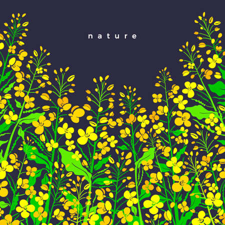 Canola flower field. Vector border color background. Oilseed illustration. Art shape of green leaves, summer bud, seed. Farmland in bloom. Organic product Illustration