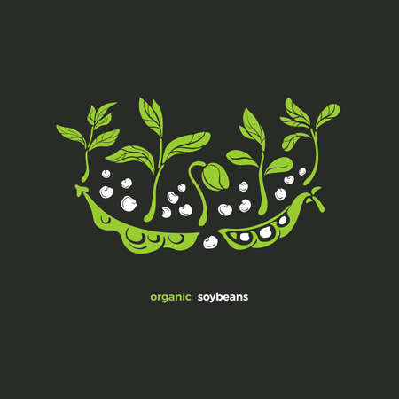 Soy symbol. Vector plant, pod, bean, sprout, leaves. Natural vegan design. Art green illustration. Healthy ingredient, bio protein, organic milk, farm plantation