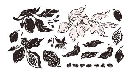 Cocoa silhouette set. Vector tree, isolate branch, bean, flower. Art hand drawn graphic illustration. Organic natural chocolate Ilustração