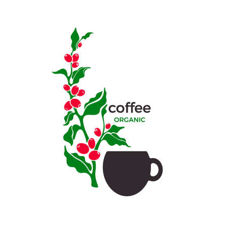 Coffee plant. Vector painted symbol. Organic aroma drink in cup. Art design isolate on white background. Tropical sticker for cafe