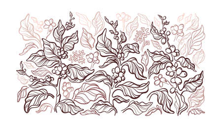 Coffee plant. Vector graphic background. Art sketch branch, leaves, bean. Nature hand drawn illustration, botanical pattern. Organic aroma drink