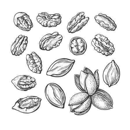 Pecan nuts set. Vector texture hand drawn sketch. Vintage botanical illustration isolated on white background. Healthy organic food. Farm harvest