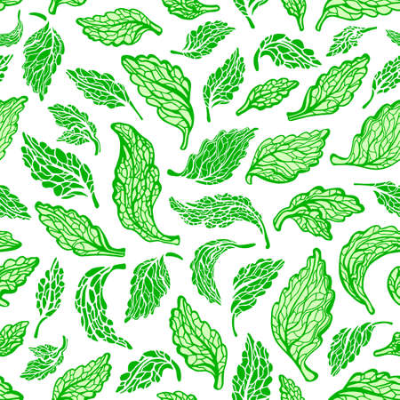 Stevia seamless pattern. Vector green leaves. Health sweet alternative drink. Organic natural ingredient. Botanical hand draw graphic sketch on white background Ilustração