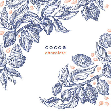 Cacao texture plant. Vector graphic bean, branch. Art hand drawn botanical illustration on white background. Organic chocolate, aroma drink, natural food. Vintage engraved sketch