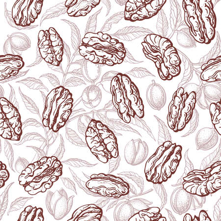 Pecan nuts seamless pattern. Vector plant, engraving branch, leaf. Healthy natural food. Hand drawn vintage print on white background. Farm harvest