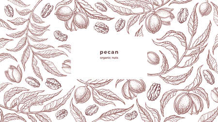 Pecan vintage background. Organic nuts, farm plantation. Vector hand drawn texture illustration, classic engraved pattern with text.