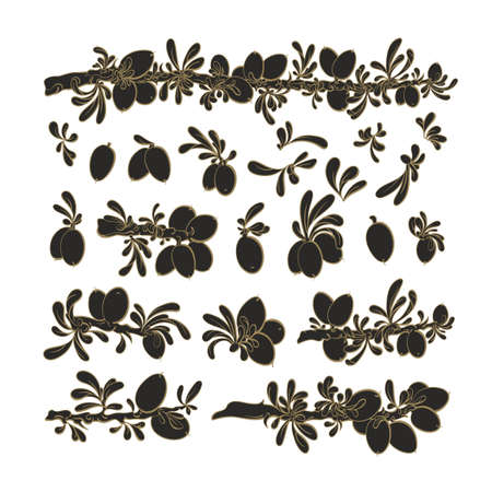 Argan plant set. Vector graphic botanical collection. Oil bean, texture leaf. Art engraving illustration isolated on white background. Nature harvest, raw plantation