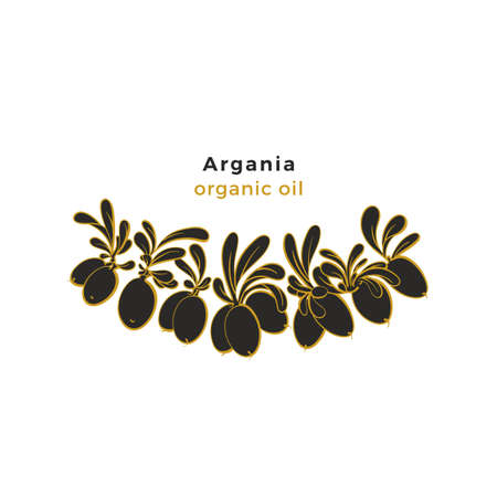 Argania tree pattern. Vector oil beans, art line leaves. Graphic illustration, botanical symbol. Nature set, organic harvest
