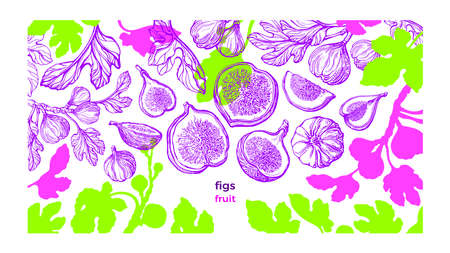 Figs plant template. Vector fresh plantation. Hand drawn color sketch, art pattern on white background. Botanical tree, summer fruits, texture leaf. Sweet exotic food